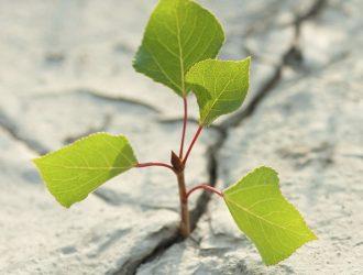 Bridget Mannion Leaf Growth