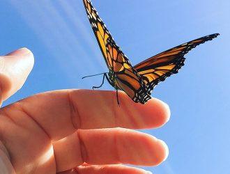 Bridget Mannion Butterfly
